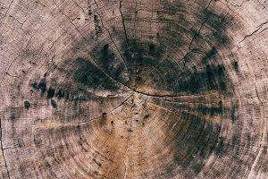Пропитки против деревоокрашивающих грибов