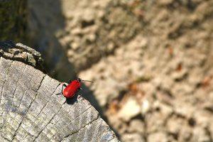 Отбеливатели пропитки от жуков древесины