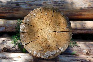Пропитки от атмосферного воздействия на древесину