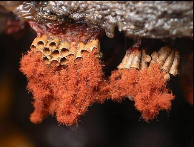 Восстановление цвета древесины и средство восстановления Биощит