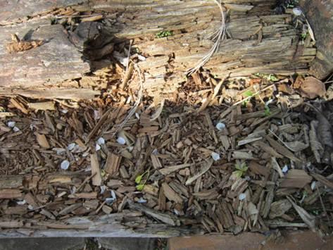 Почему разрушается древесина?